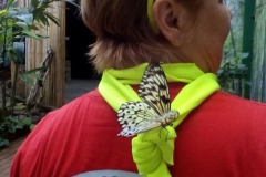Schmetterlingsmuseum 018