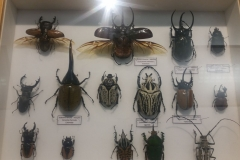 Schmetterlingsmuseum 022