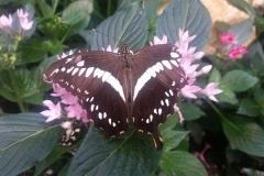 Schmetterlingsmuseum 023