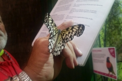 Schmetterlingsmuseum 025